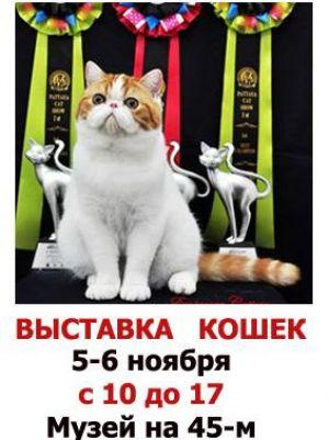 """Выставка кошек и конкурс детского рисунка """"Кошкин дом"""""""
