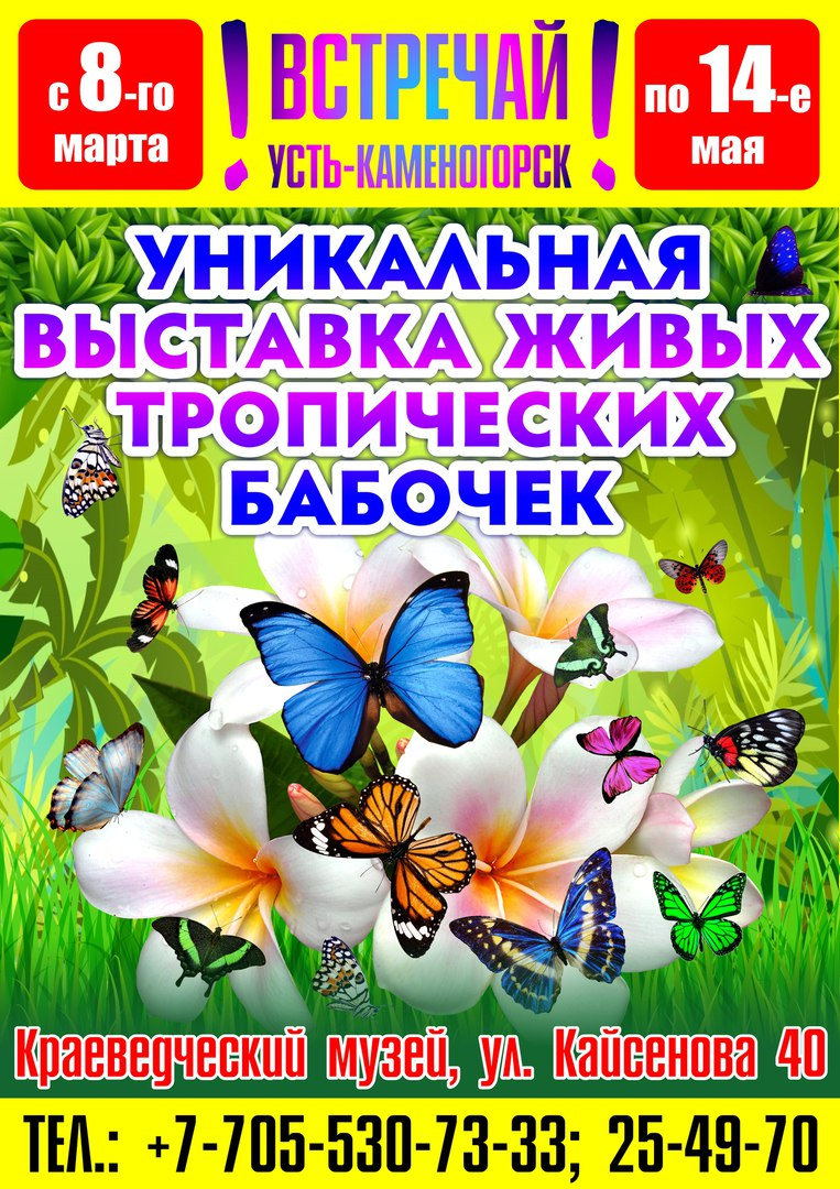 """Выставка тропических бабочек """"Живая радуга"""""""