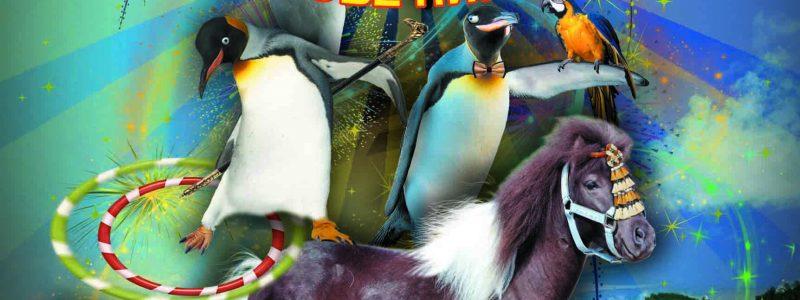 Парад зверей на острове пингвинов
