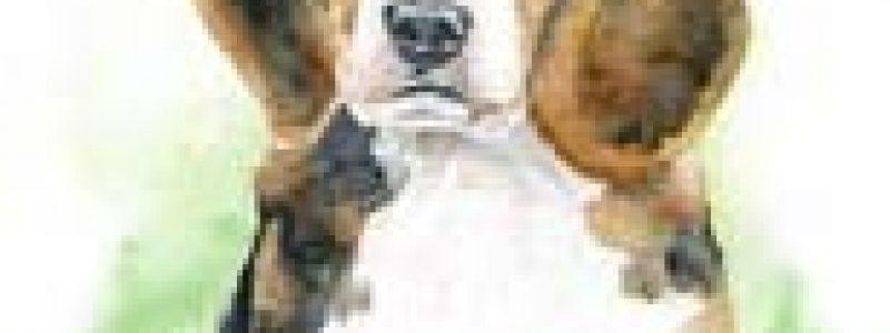 Деревенский пес Акбай